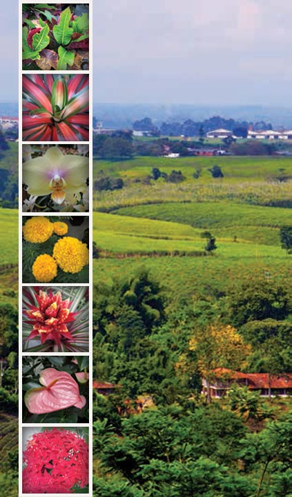 Nurseries and Small Ornamental-Foliage and Potted-Plant Growers of Colombia